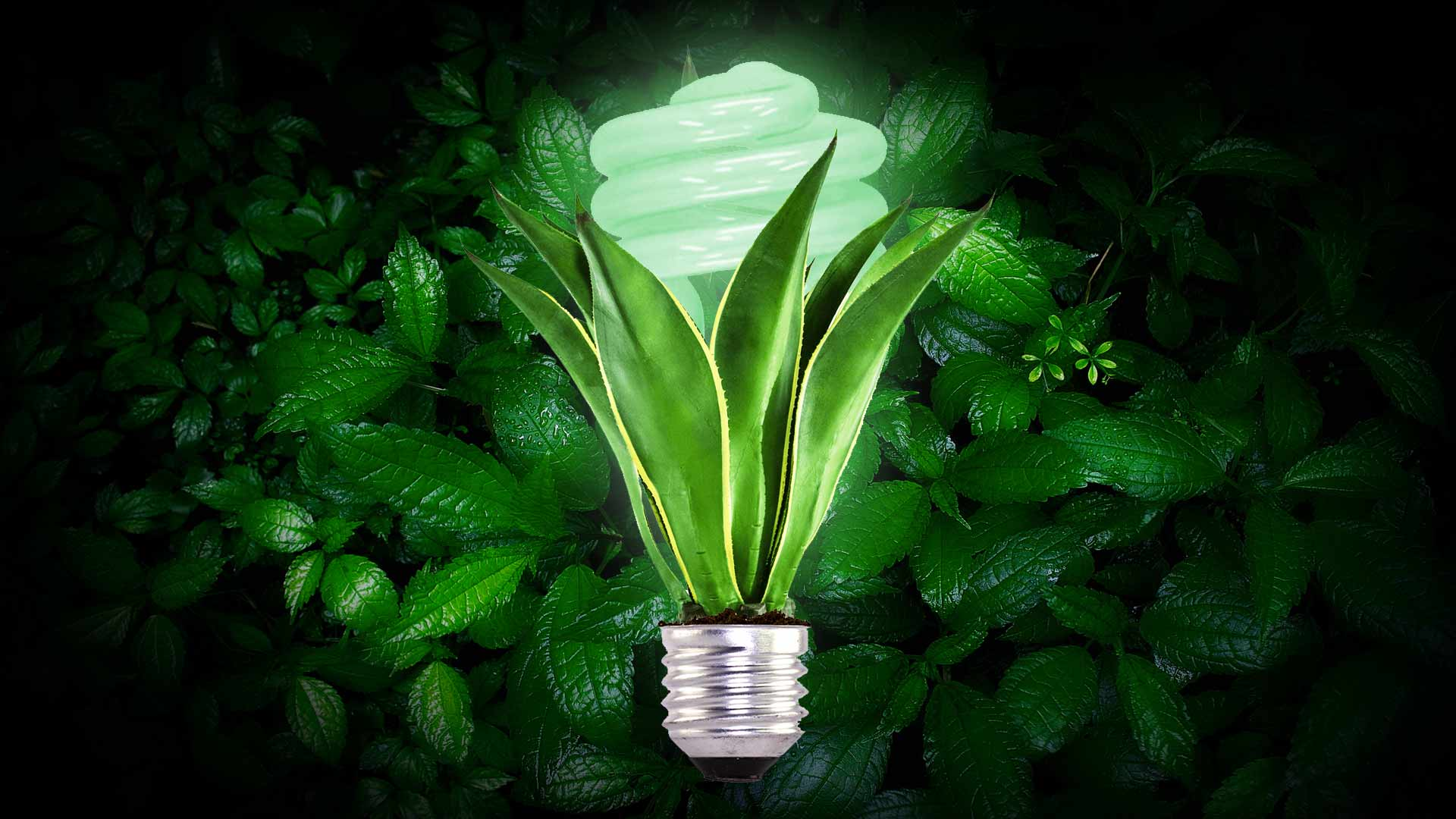 saul-ameliach-especialista-en-nuevos-desarrollos-saul-ameliach--plantas-adios-a-la-luz-electrica-plantas-con-luz-propia-noticias