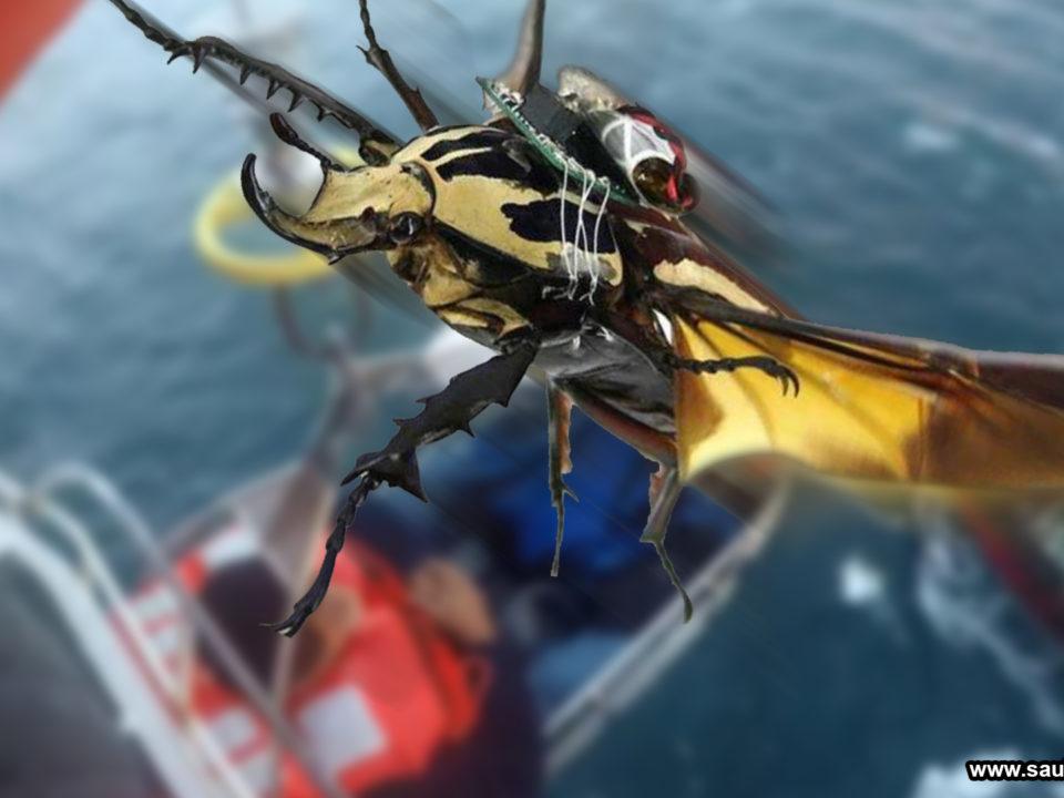 saul ameliach - escarabajos - bio-robots